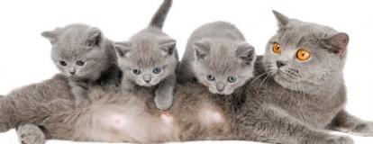 Ветеринарные услуги в акушерстве и гинекологии