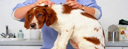 Вакцинация собак в Алматы
