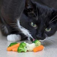 Рекомендации ветеринаров для кошек