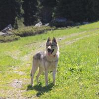 Чешские влчаки в ущелье Алмаарасан